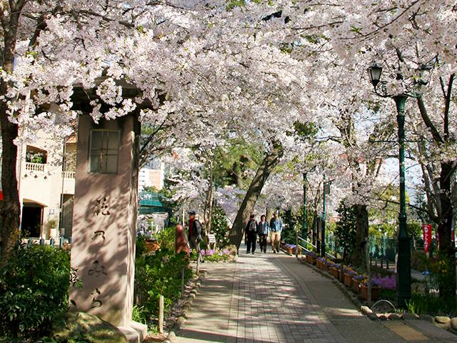 桜咲く「花のみち」